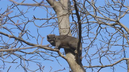 kotki : Helpless cat on the top of tree closeup footage with sound