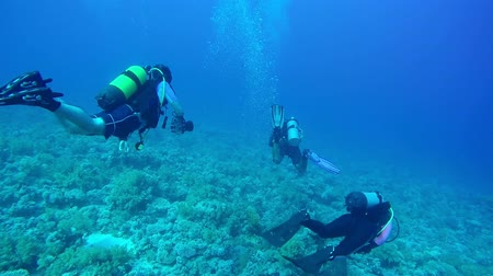 mergulhador : Scuba divers descending to the bottom
