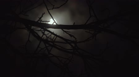 полночь : Dark scary night with bright moon