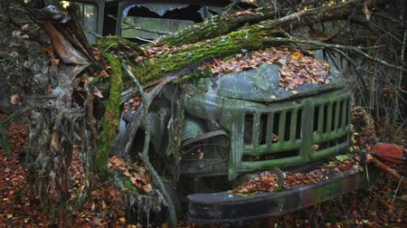 baleset : Damaged car outdoors in the forest Stock mozgókép