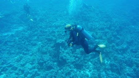 mergulhador : Divers underwater in the sea