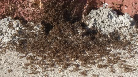 haşarat : Ants in the house on the ground