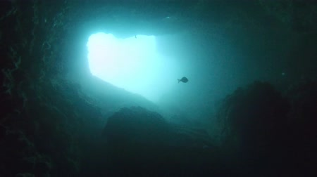 tünel : Footage of an underwater cave with light Stok Video