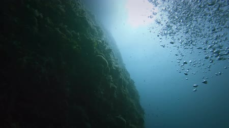 água salgada : Large coral reef against the water surface