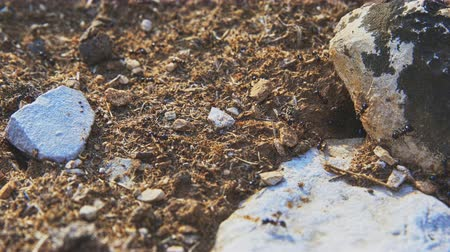 tünel : Lots of ants at their tunnel