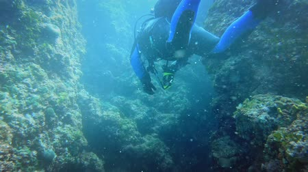 keşif : Divers underwater neer coral reef Stok Video