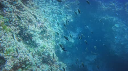 água salgada : Large group of fish near sea bottom