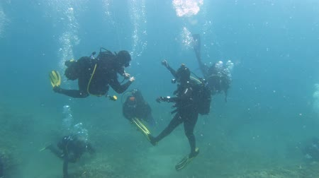mergulhador : Underwater foorage of Divers in the water