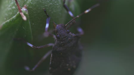 artrópode : Insect feeding from fresh stem Vídeos