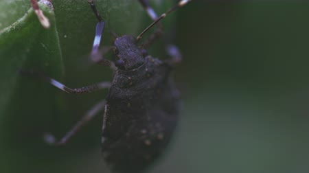 invasive : Insect feeding from fresh stem Stock Footage