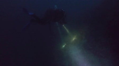 mergulhador : Divers with flashlights underwater at night