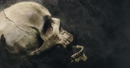 szkielet : Skull of a dead man in on the ground