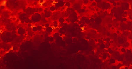 bloodcell : Small red blood cells in fluid Stock Footage
