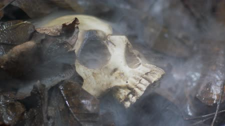 dead forest : Human skull on the wet soild with smoke flowing
