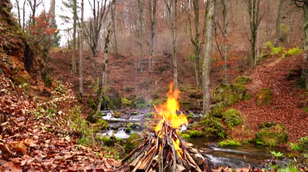 grillowanie : Incredible cozy wood fireplace camp fire burning with orange flame in wild nature autumn forest