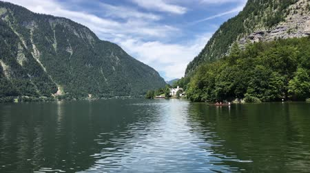 hallstatter see : Swimming panorama in mirror surface lake water in wonderful wild nature pine tree forest Austrian mountain landscape