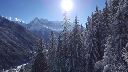 cielo sereno : Fascinating aerial drone flight in clear blue sunny sky over snowy pine tree tops in winter forest in Alps mountain