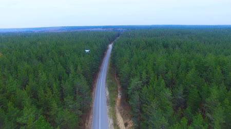 stable fly : Drone flying over road in a forest. Aerial shot.