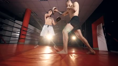 harc : Kickboxers, mma fighters boxing, exercising for the big fight. Slow motion.