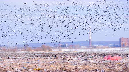 guba : Birds flying over the landfill. 4K. Stock mozgókép