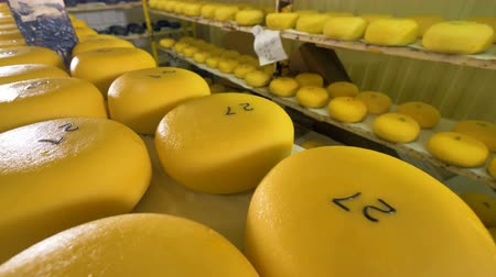 twaróg : Big yellow wheels of cheese at a warehouse.