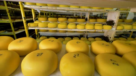 parmigiano : Storage of cheese at milk products factory. Stock Footage