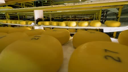 погрузчик : A lot of cheese being stored at cheese plant.