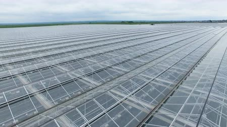 utilidade : Uniform greenhouse roof tiles in close view.