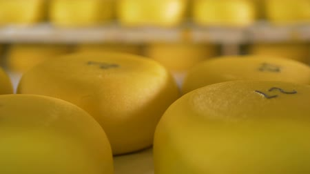 amadurecida : Bright yellow wax cover of stored cheese.