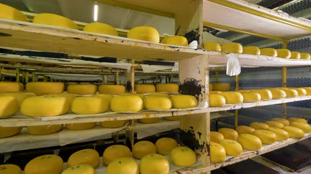 kurutma : A deep view between full storage shelves with round cheese.