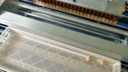 sorted : Eggs moving at a modern automated conveyor. 4K. Stock Footage