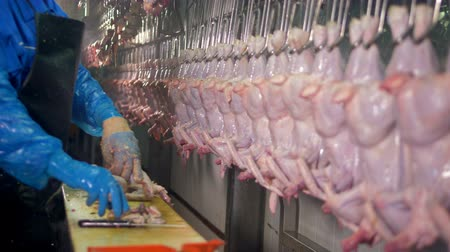 hang : A worker checks chicken carcasses for internal organs.