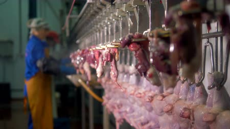 dead chickens : Two rows of chicken carcasses and separated bunch of internal organs.