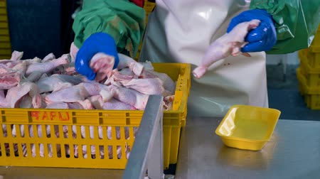 açougue : Workers hands remove chicken legs from bulk basket into individual packages. Vídeos