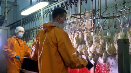 hang : Two workers in uniforms and masks cut chickens throats.