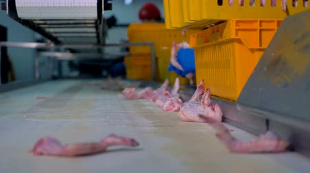 se movendo para cima : Chicken wings collected from the conveyor into yellow baskets.
