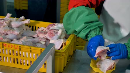 dead chickens : A worker places two chicken legs in one container.