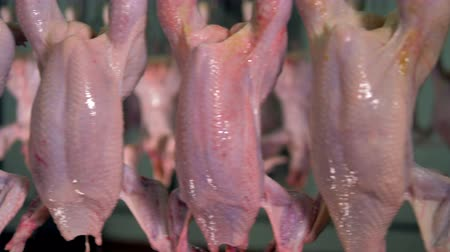dead chickens : A close view on bare chicken carcasses in detail. Stock Footage
