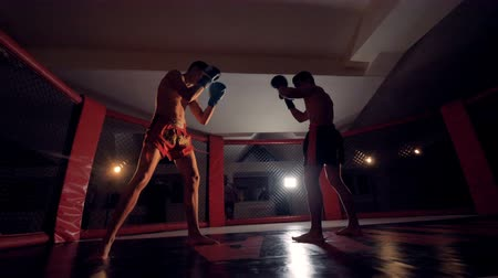 blood sport : MMA fighters in the octagonal ring for fights.