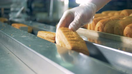 tray : A close view on pastry loaded into a packaging line.