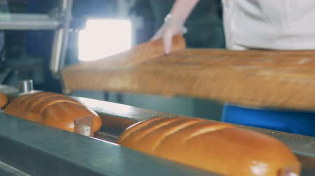 испечь : Long loaves of bread are put on the conveyor, close up.
