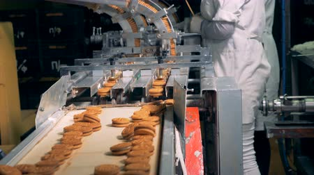 işlenmiş : Ready biscuits are moving along the belt after getting dropped from the conveyor Stok Video