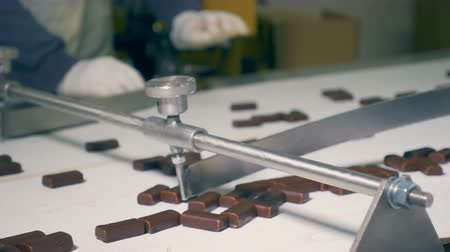 sorted : Close up of factory workers sorting chocolate candies with their hands