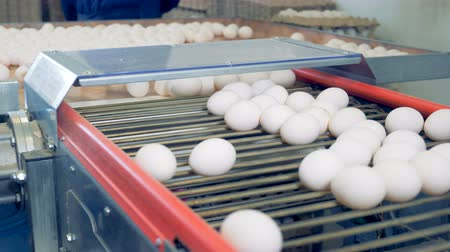 bird eggs : Egg factory staff sorting eggs Eggs are moving on the conveyor.