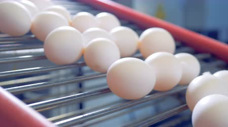 egg sorting : Eggs are moving on the conveyor. Stock Footage