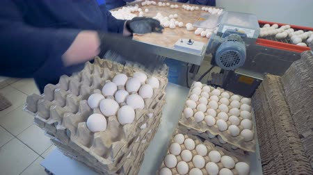 egg sorting : Worker packing fresh eggs in the egg sorting factory. Stock Footage
