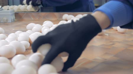 egg sorting : Chicken eggs sorting process. Poultry workers sorting white chicken eggs. 4K.