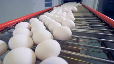 egg sorting : Fresh chicken eggs are moving on the conveyor. Stock Footage
