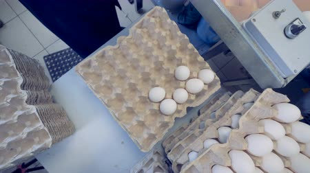 collected : Top view of a carton egg rack getting filled with eggs