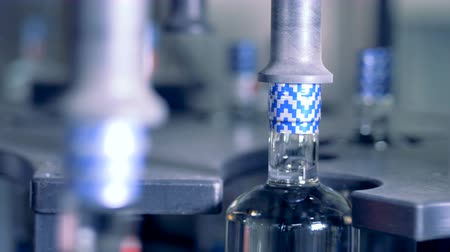 bung : Bottles stamped on their caps, close up. Stock Footage